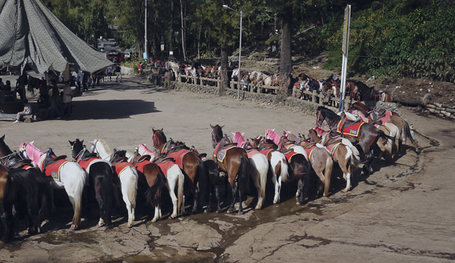Horses lining up