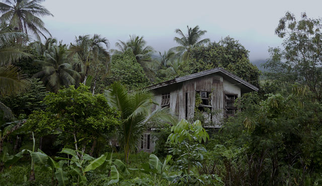 Ancestral home swallowed by the forest