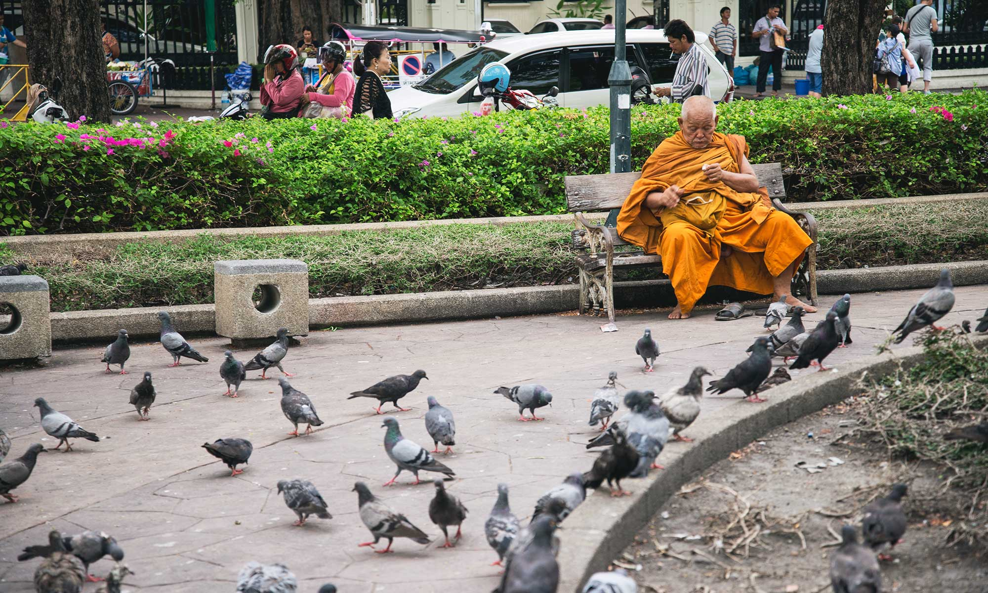 monk and pigeons