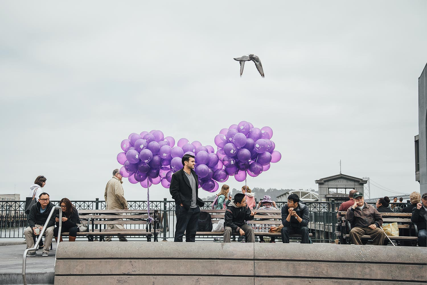Man and purple balloons behind him