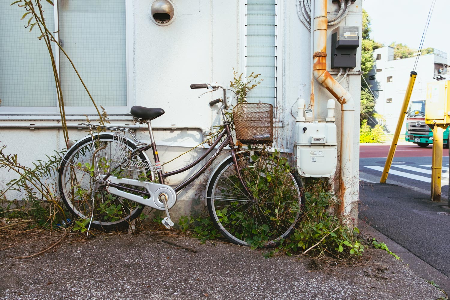 bike devoured by plants