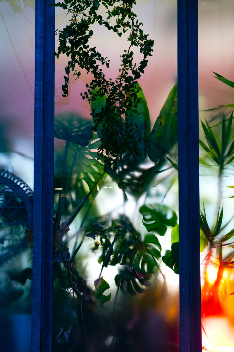 Plants behind glass in bath house