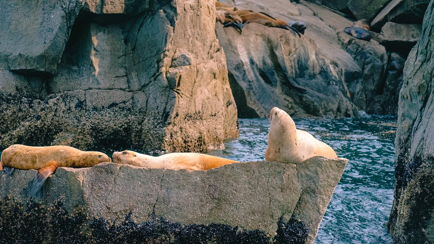 Sealions chilling